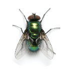 Xspectra® detects Insects