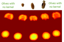 Kernel fragments in olives